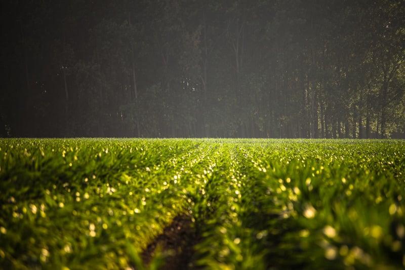 Stimolare la radicazione per migliorare i raccolti