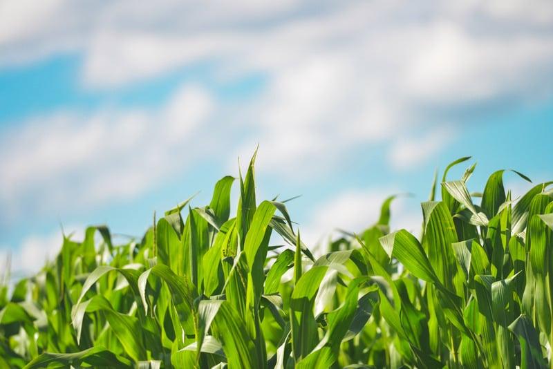Canva - Green Plants