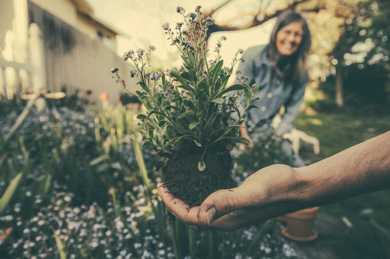 Canva - Person Holding a Garden Soil with Plant