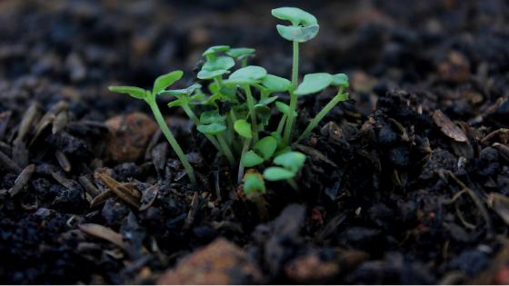 fertilità terreno