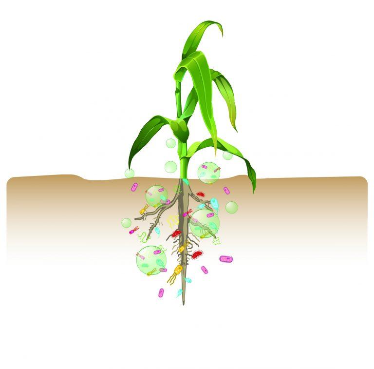 regime agricolo convenzionale biologico
