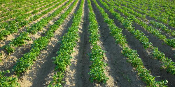 migliorare-la-produzione-agronomica