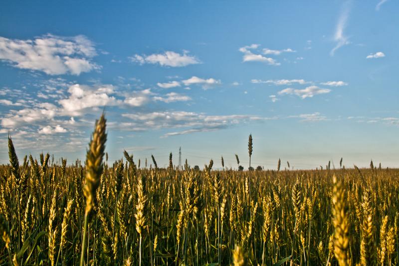cause e rimedi impoverimento del terreno